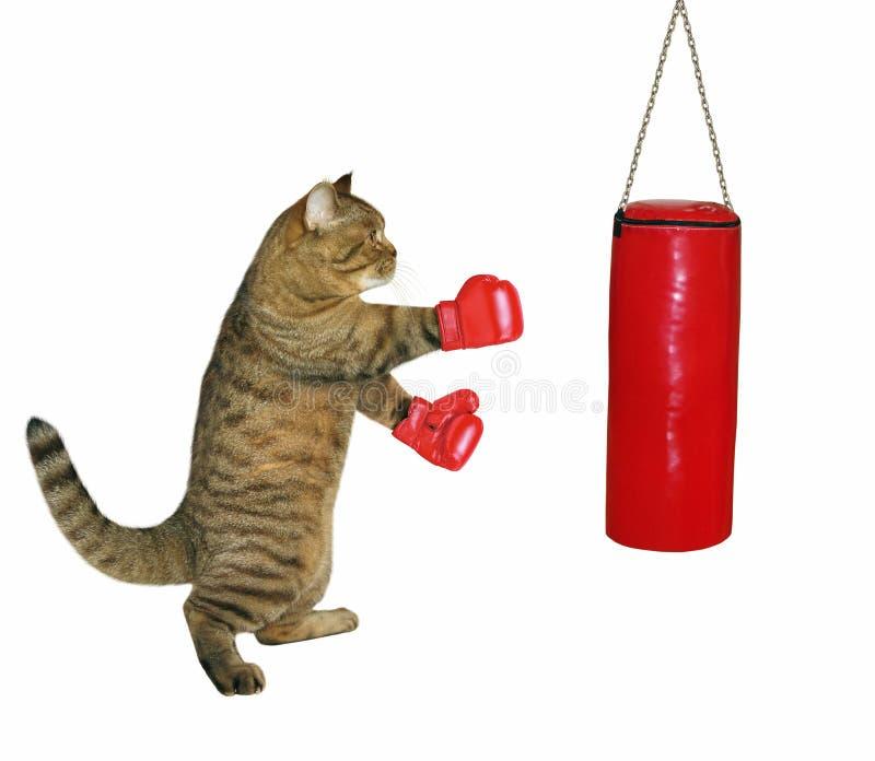 Kat in bokshandschoenen royalty-vrije stock afbeeldingen