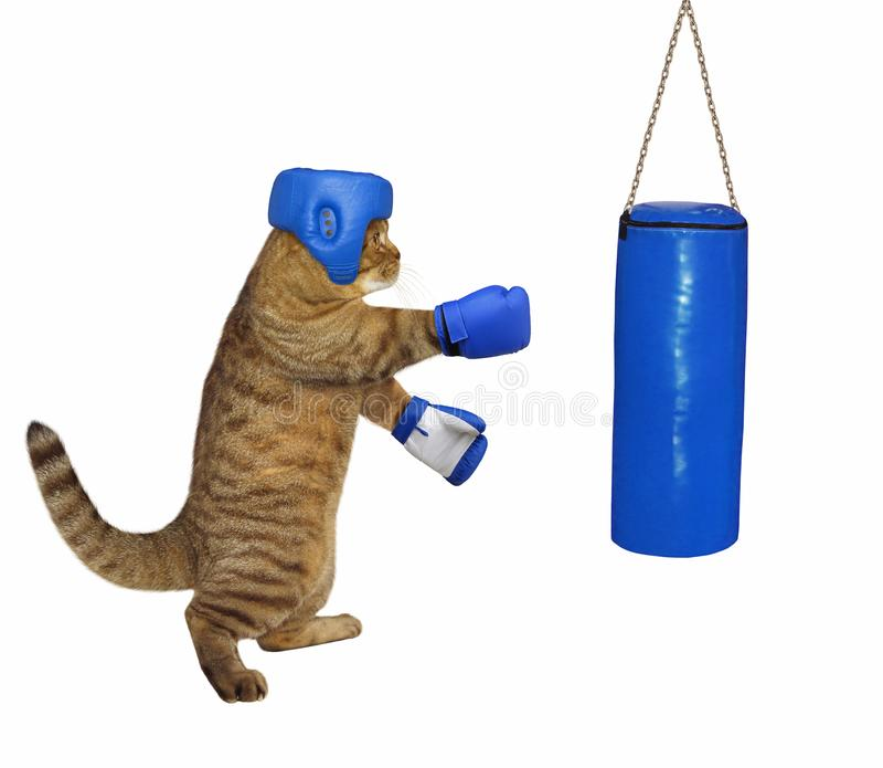 Kat in bokshandschoenen en een hoofddeksel stock fotografie