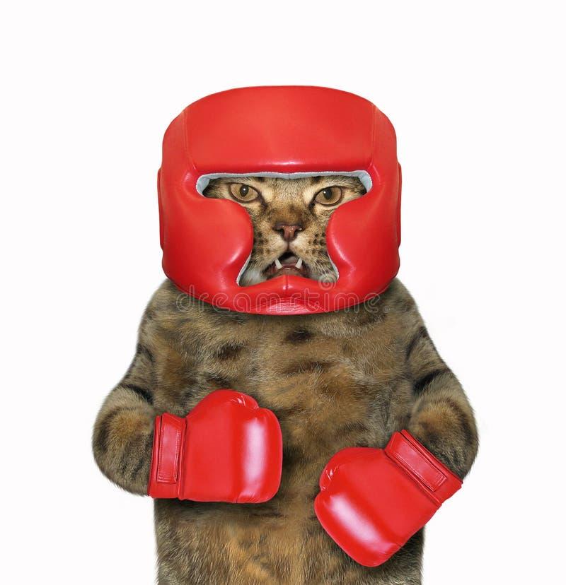 Kat in bokshandschoenen en een hoofddeksel 2 royalty-vrije stock fotografie