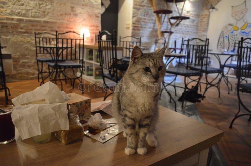 Kat caffe in Praag royalty-vrije stock afbeeldingen