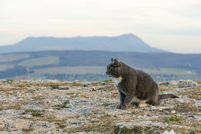 Kat in de Bergen Kat bovenop de berg stock foto