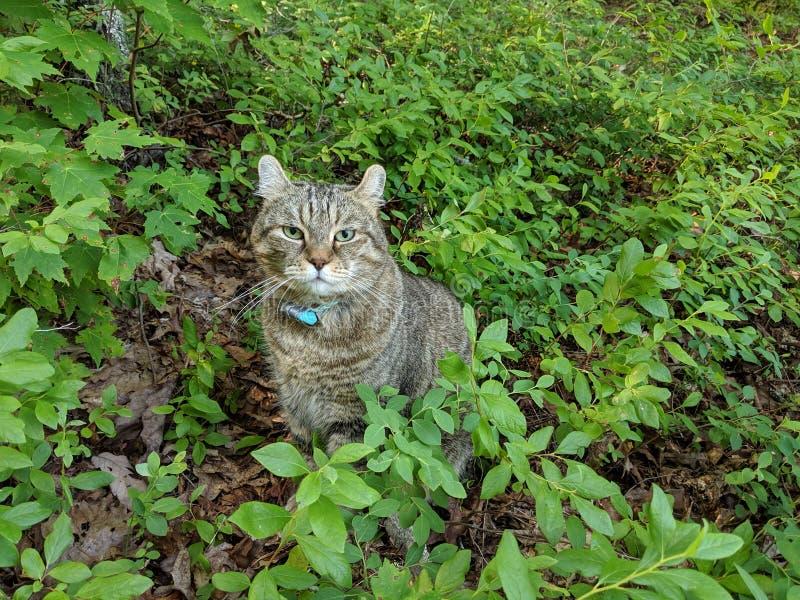 Kat in de Bosbessenstruiken stock fotografie