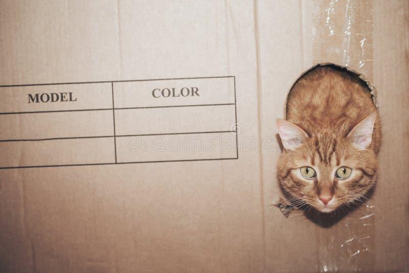 Kat in de doos royalty-vrije stock afbeelding