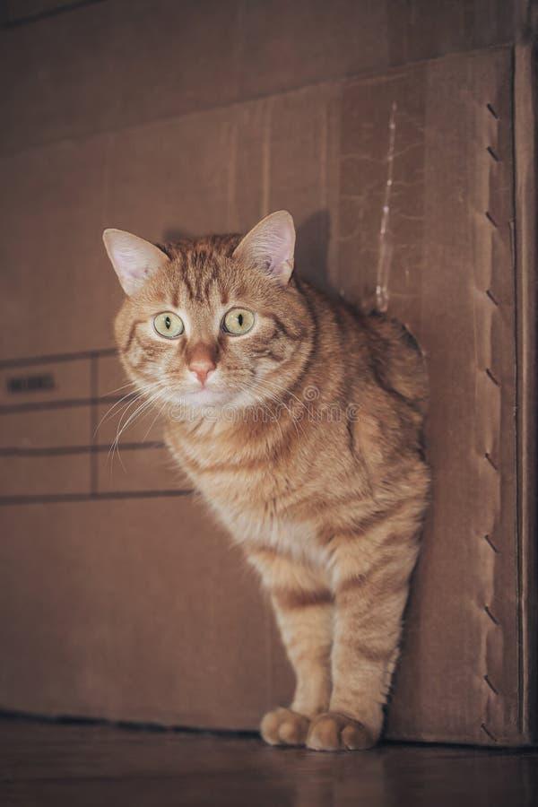 Kat in de doos stock afbeeldingen