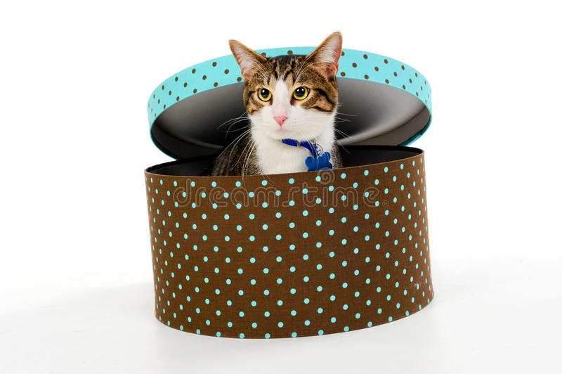 Kat in de doos stock afbeelding