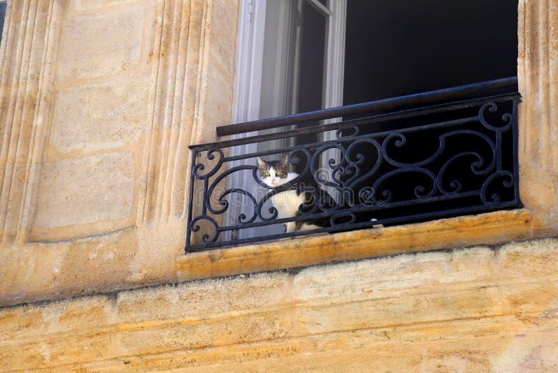 Kat in de flat royalty-vrije stock fotografie