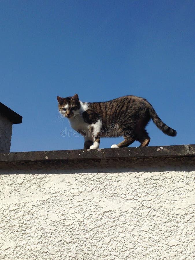 Kat in de Hemel royalty-vrije stock afbeelding