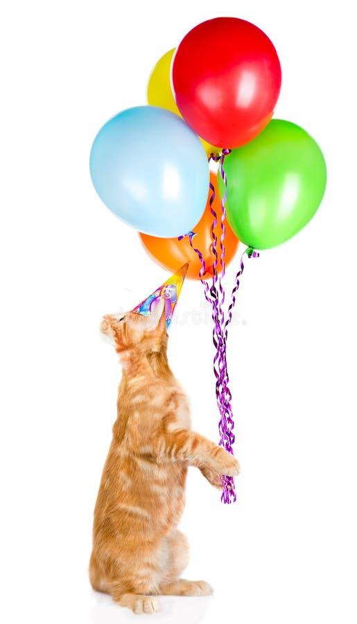 Kat in de holdingsballons van de verjaardagshoed Geïsoleerdj op witte achtergrond stock afbeeldingen