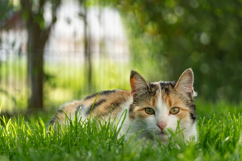 Kat de jacht in gras stock afbeeldingen