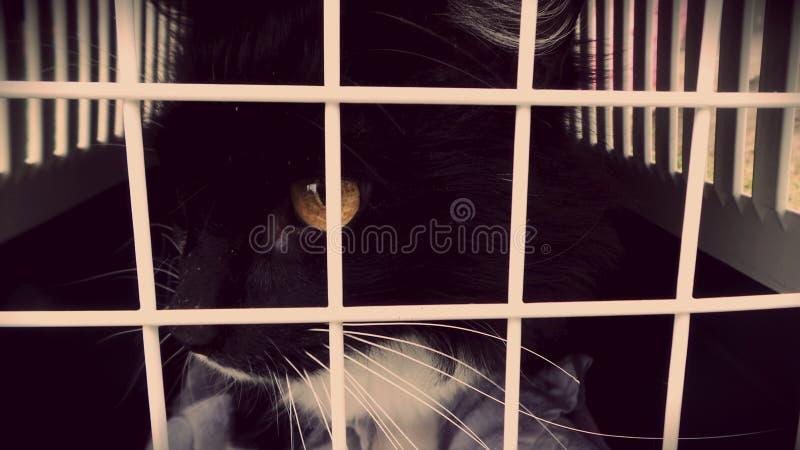 Kat in de kooi stock afbeelding