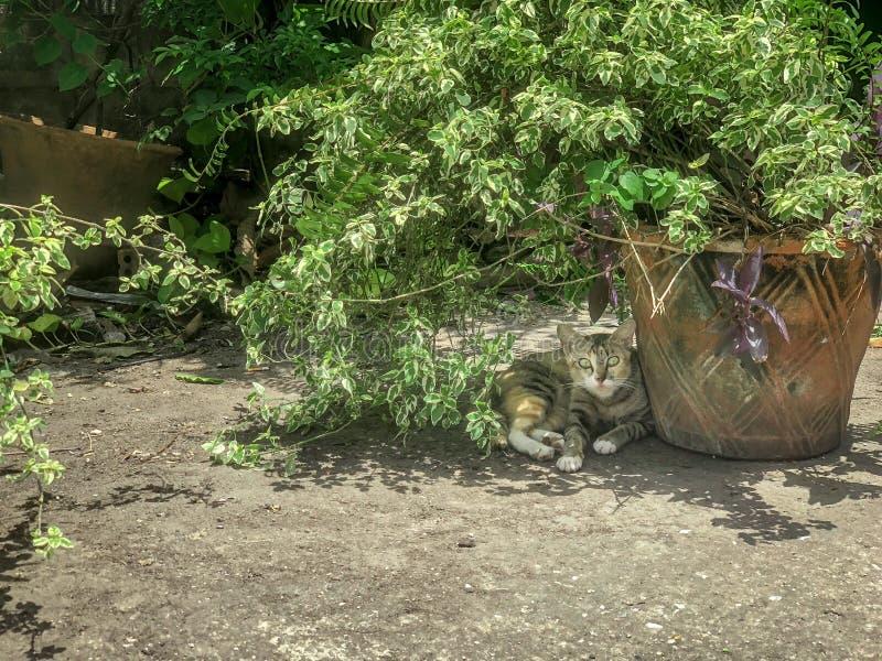 Kat in de schaduw, waakzaam en wakker de fotograaf die die het schieten royalty-vrije stock afbeelding