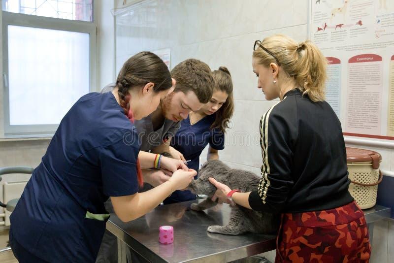 Kat in de veterinaire kliniek stock fotografie