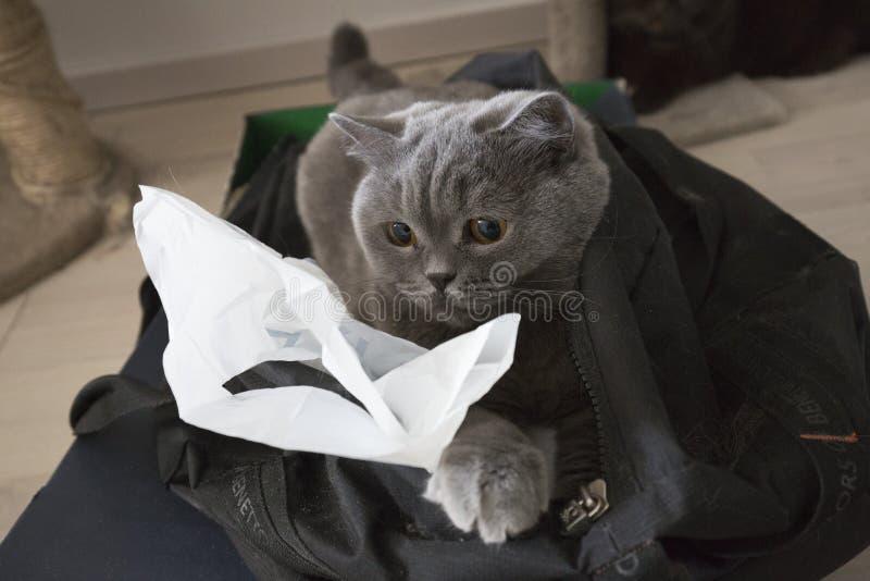 Kat in de zak stock fotografie