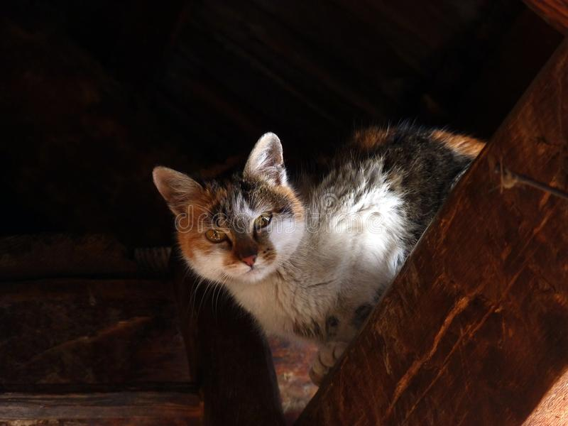 Kat in de zolder royalty-vrije stock foto