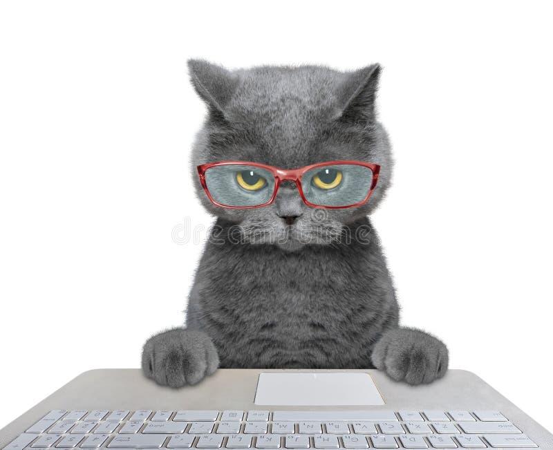 Kat die aan de computer werken stock foto's