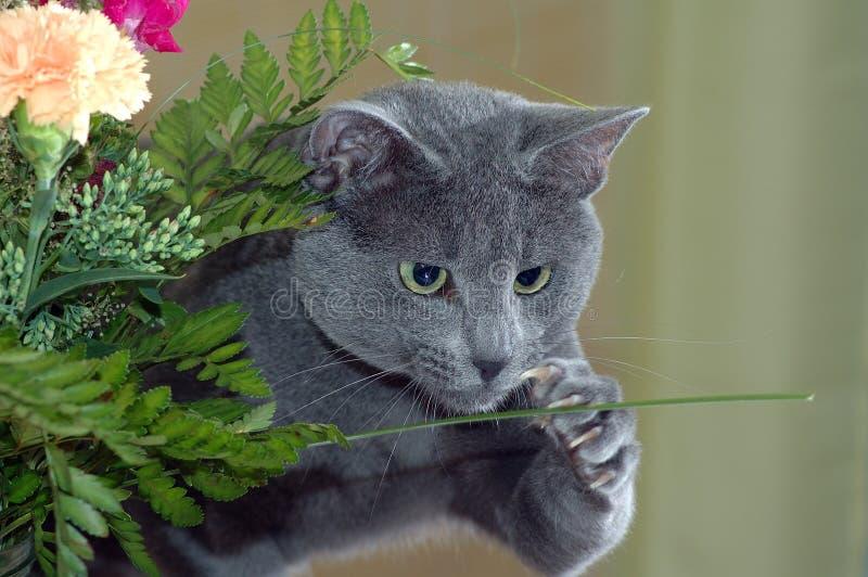 Kat die bloem vangt stock afbeelding