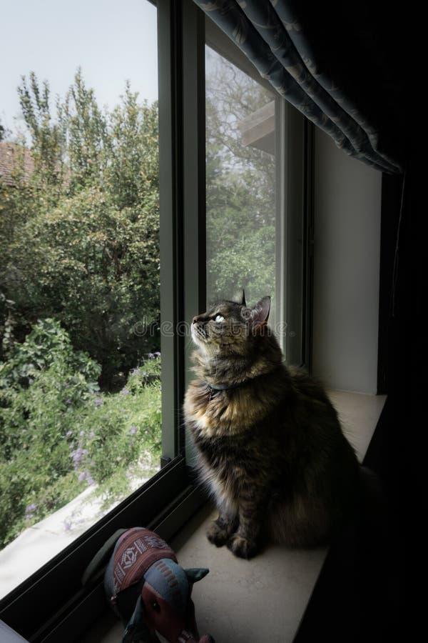 Kat die door een venster kijken royalty-vrije stock foto's