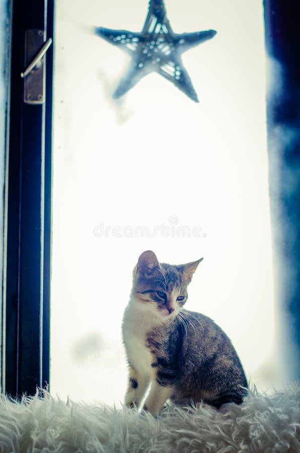 Kat die door venster kijken stock afbeeldingen