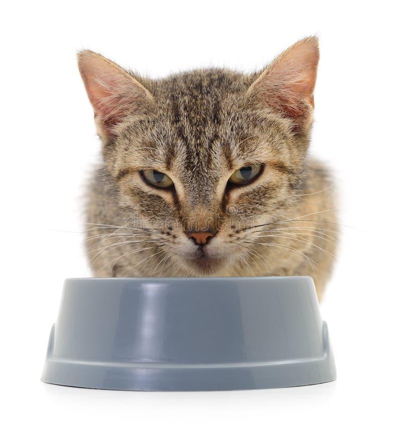 Kat die droog voedsel eet stock foto's