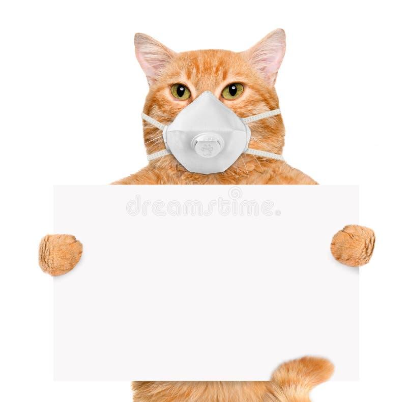Kat die een gezichts beschermend masker dragen stock fotografie