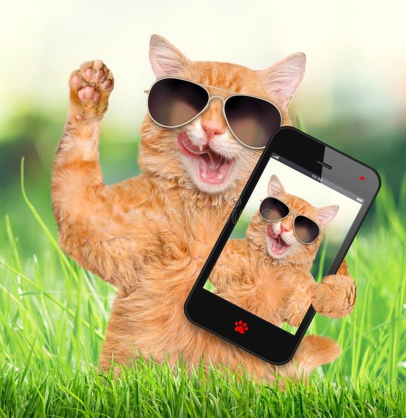 Kat die een selfie met een smartphone nemen royalty-vrije stock foto's
