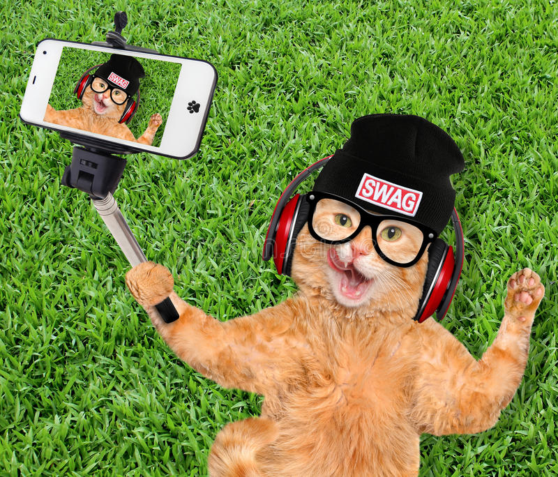 Kat die een selfie met een smartphone nemen stock afbeeldingen