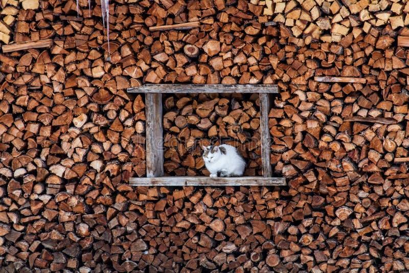 Kat die een warme plaats tussen houten stukken zoeken royalty-vrije stock fotografie