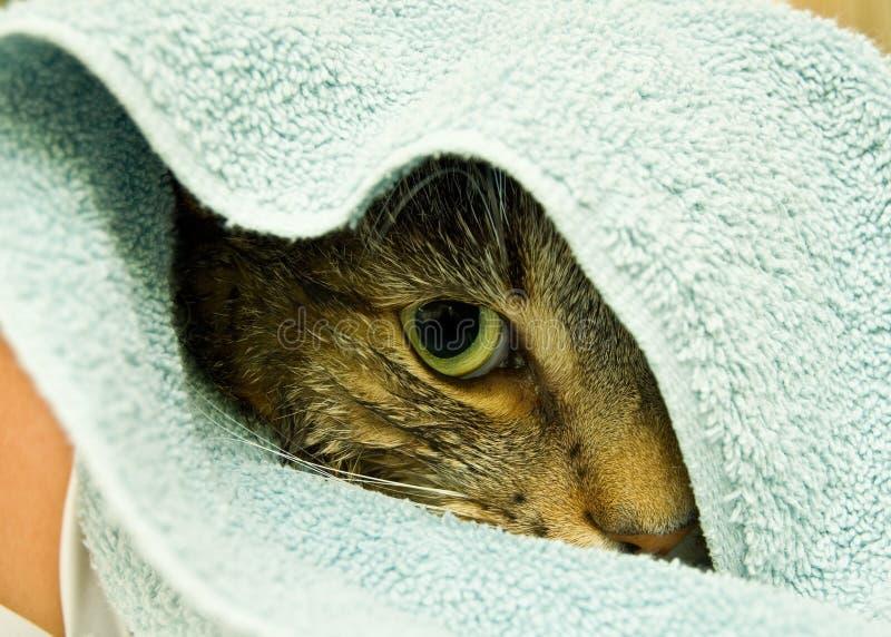 Kat die in handdoek wordt verpakt royalty-vrije stock fotografie