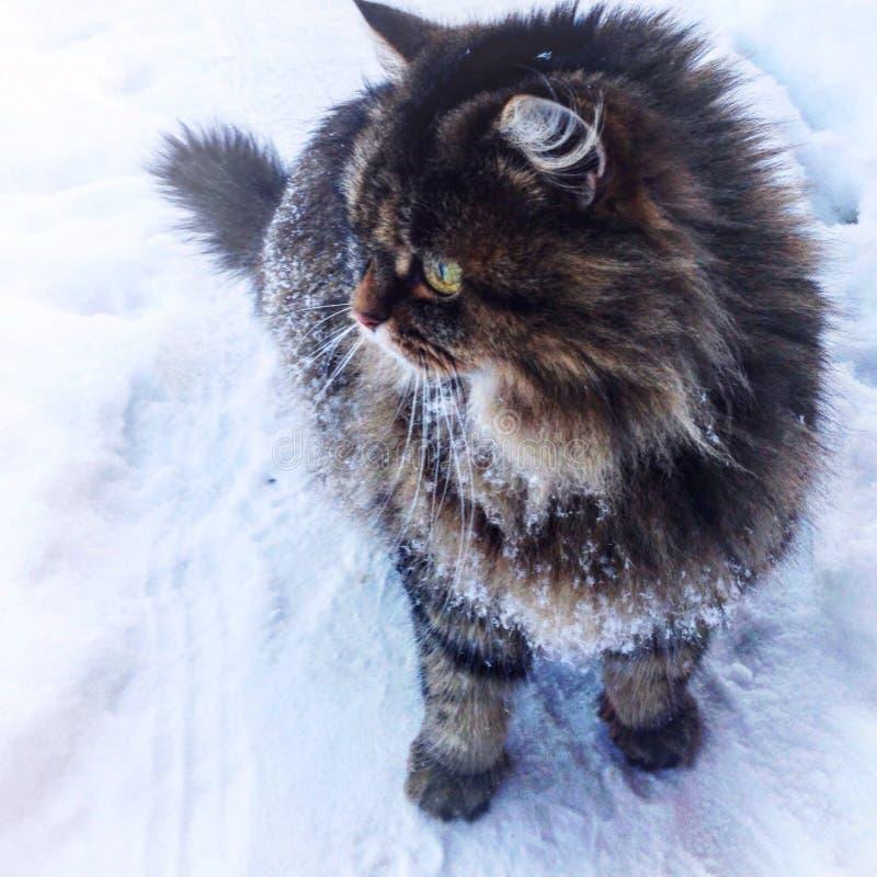Kat die lopen als de afstand te onderzoeken royalty-vrije stock afbeelding