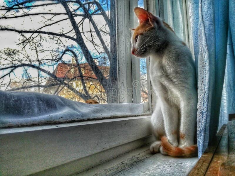Kat die in mooie venstermening genieten van royalty-vrije stock foto's