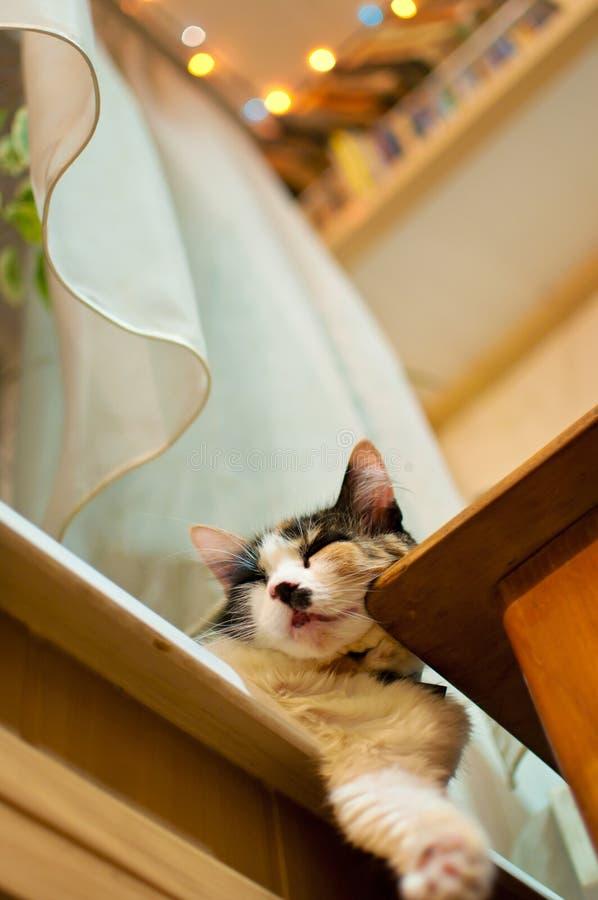 Kat die nutteloos op een venstervensterbank liggen stock foto's