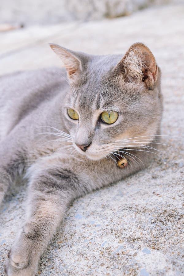 Kat die op cementvloer liggen, selectieve nadruk stock afbeelding