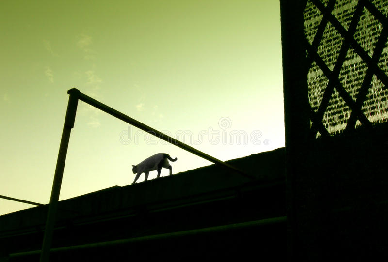 Kat die op dak loopt royalty-vrije stock afbeelding