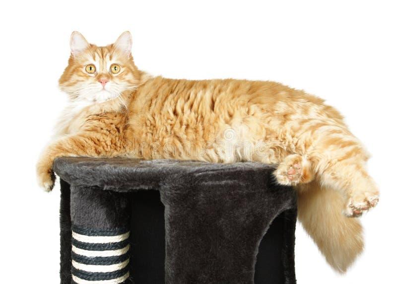 Kat die op de bovenkant van de kat rust scratcher stock afbeeldingen