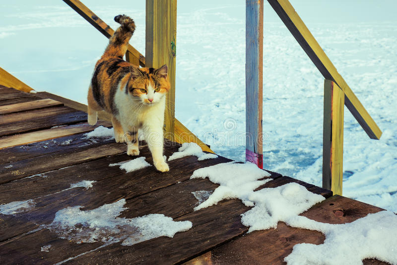 Kat die op de portiek lopen stock fotografie