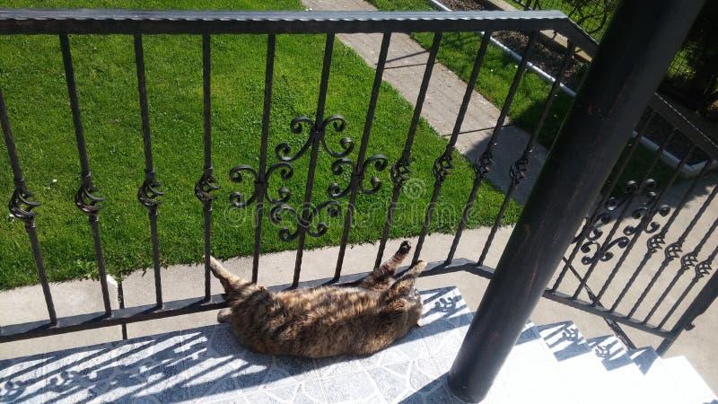 Kat die op de portiek op de zonnige dag leggen stock fotografie