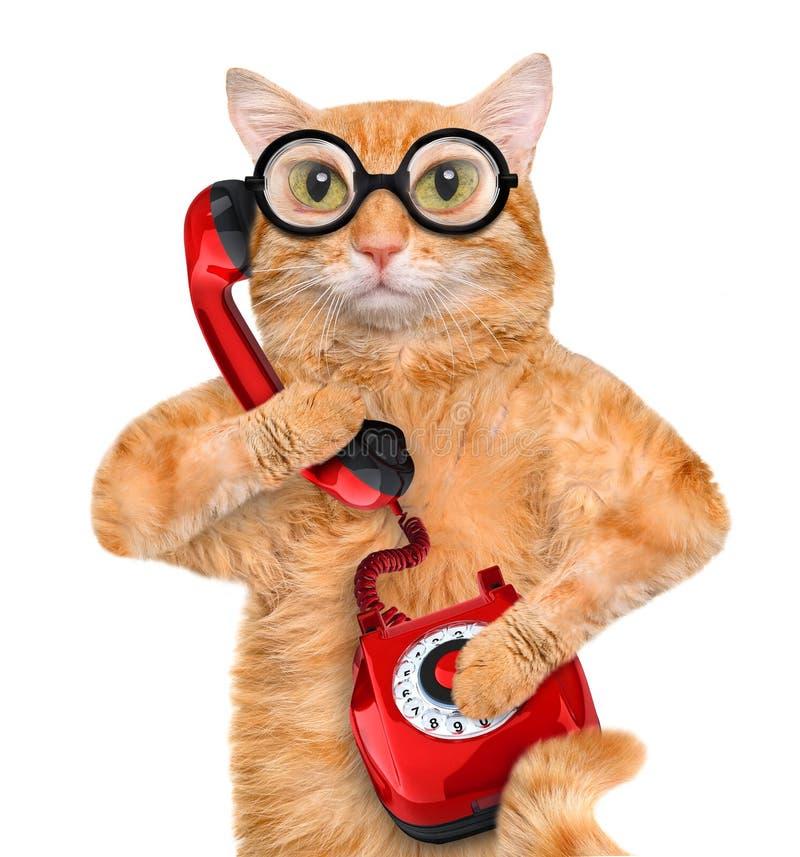 Kat die op de telefoon spreken royalty-vrije stock foto