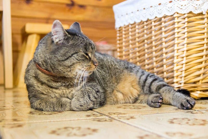 Kat die op de vloer leggen royalty-vrije stock foto's