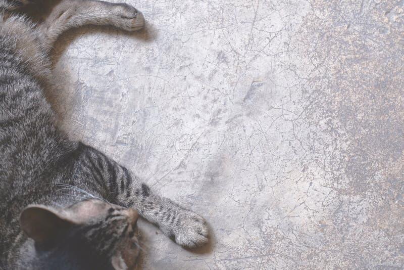 Kat die op de vloer ligt stock afbeelding