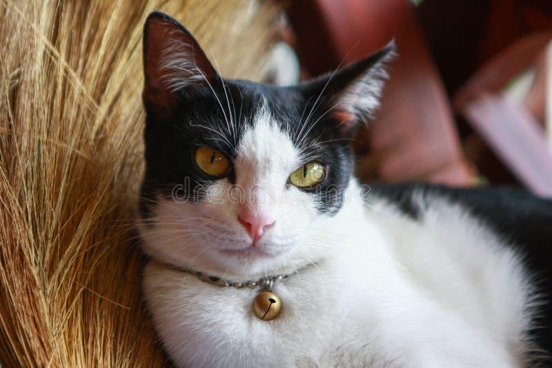 Kat die op een bezem liggen royalty-vrije stock afbeelding
