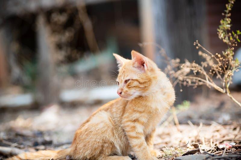 Kat die op een Kei wordt gebogen stock afbeeldingen