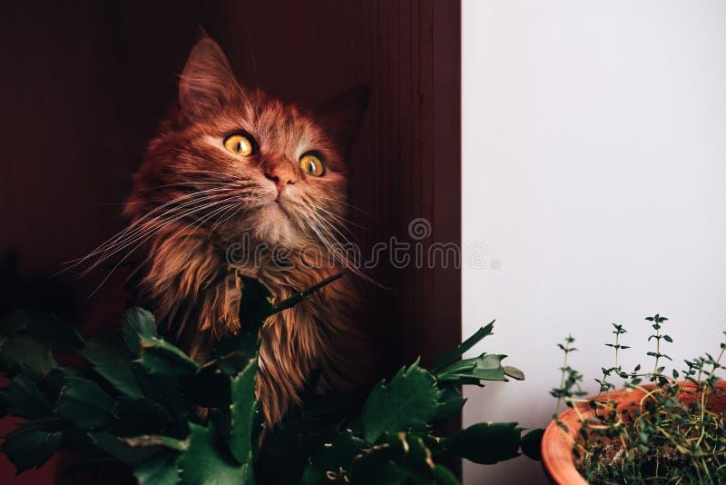 Kat die op een Kei wordt gebogen stock foto's