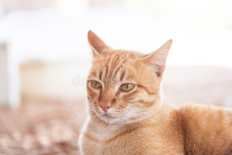 Kat die op een Kei wordt gebogen stock foto