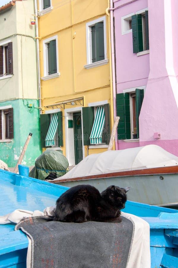 Kat die op een kleurrijke boot, Burano, Italië rusten stock afbeelding