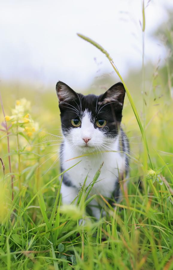 Kat die op een Zonnige groene weide en een doen schrikken neiging terug lopen royalty-vrije stock fotografie