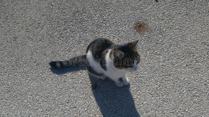 Kat die op het eiland leeft royalty-vrije stock foto