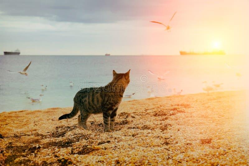 Kat die op het strand lopen stock foto