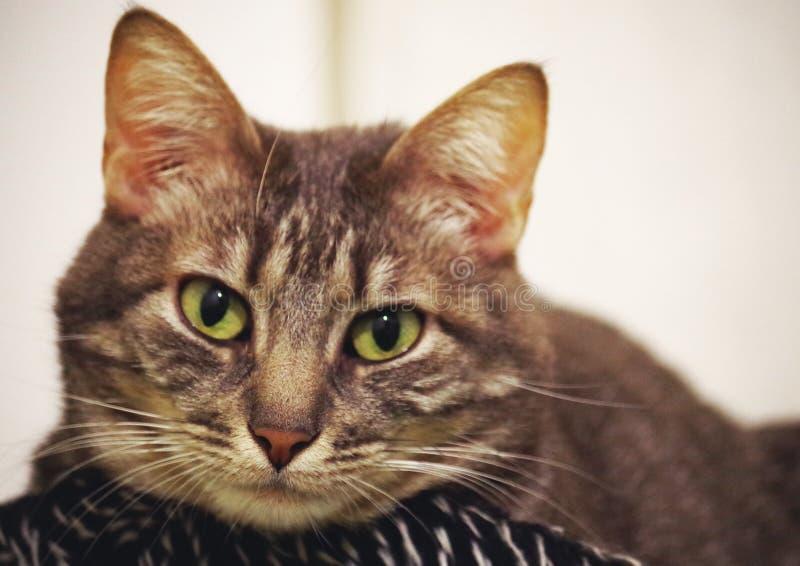 Kat die op u letten stock fotografie