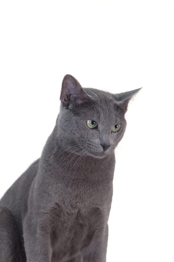 Kat die op wit wordt geïsoleerdr stock afbeelding