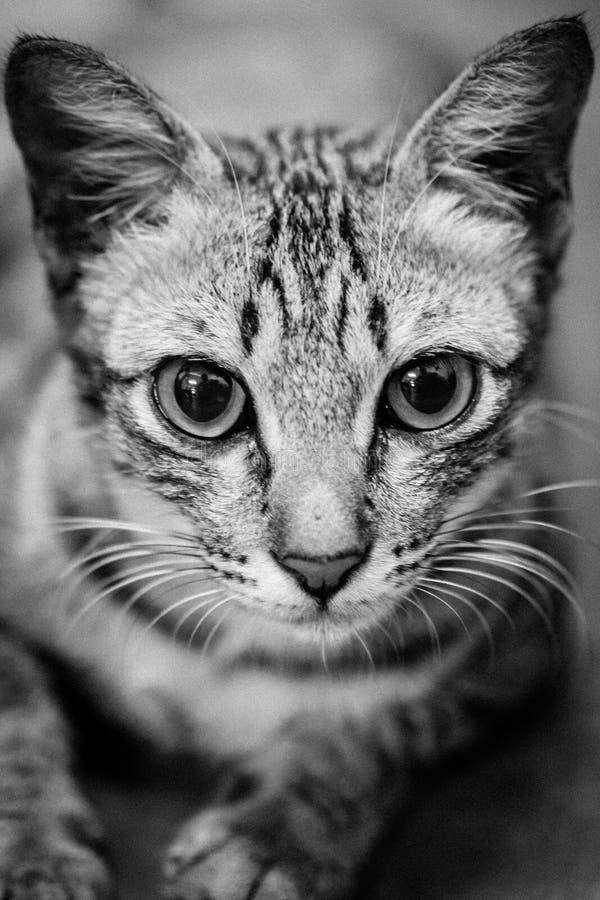 Kat die rechtstreeks bij camera met geschokt staren royalty-vrije stock fotografie